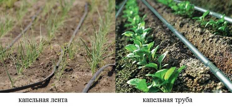 Как сделать капельный полив в теплице: спасаем бедный урожай