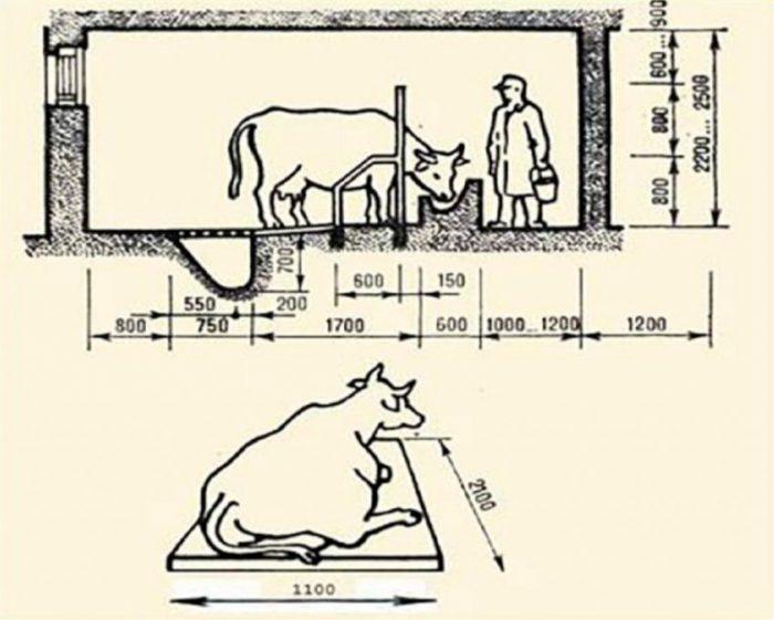 Как сделать сарай для быков: большим животным — крепкий дом