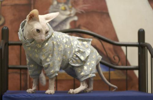 Выкройки одежды для кошек: универсал и его успешные коллеги