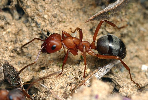 Как избавиться от муравьев в теплице: успешная борьба с мелкими агрессорами