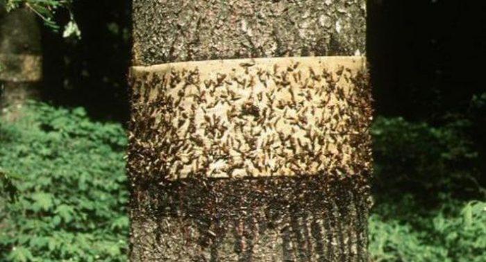 Как бороться с муравьями народными средствами: простые способы победить
