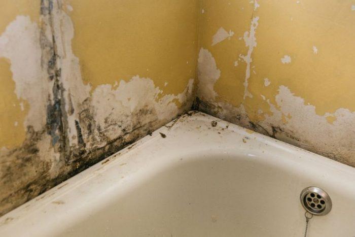 Как убрать грибок в ванной: обзор средств профессионалов и любителей