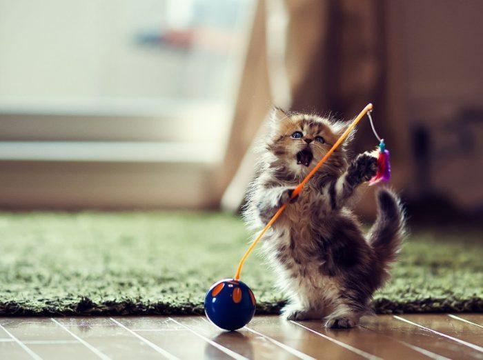 Самодельные игрушки для котят: бюджетные варианты для счастья малышей