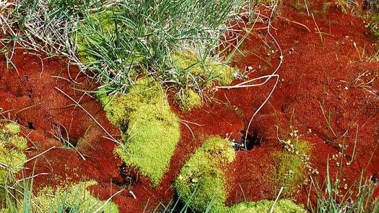 Что такое экодом: автономность и комфорт плюс гармония с природой