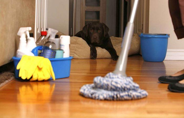 Как продезинфицировать квартиру: война с «нечистью» в домашних условиях