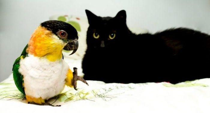 Вольер для птиц своими руками: жизнь друзей без тесноты и без обиды