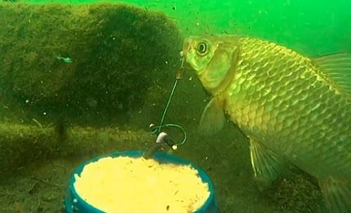 Рыболовная снасть пробка своими руками: разные секреты, работа и советы