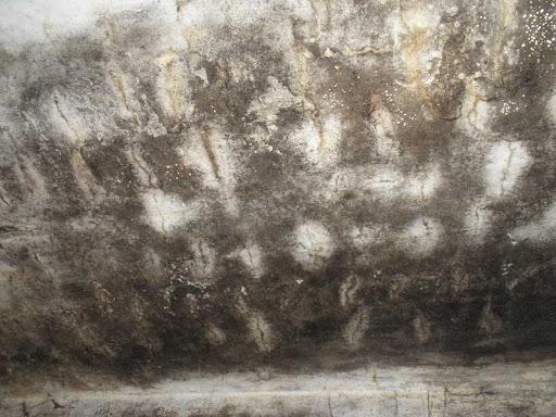 Грибок в подвале частного дома: как избавиться от упрямой плесени?