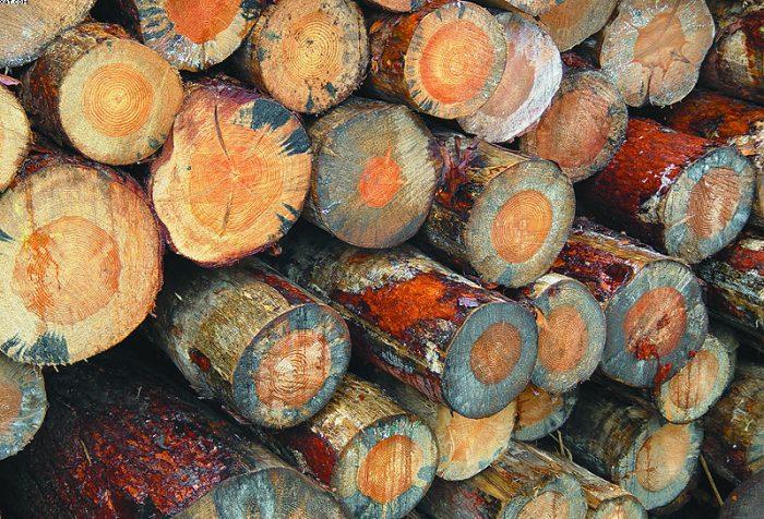 Чем убрать синеву с дерева: народные средства и препараты профи