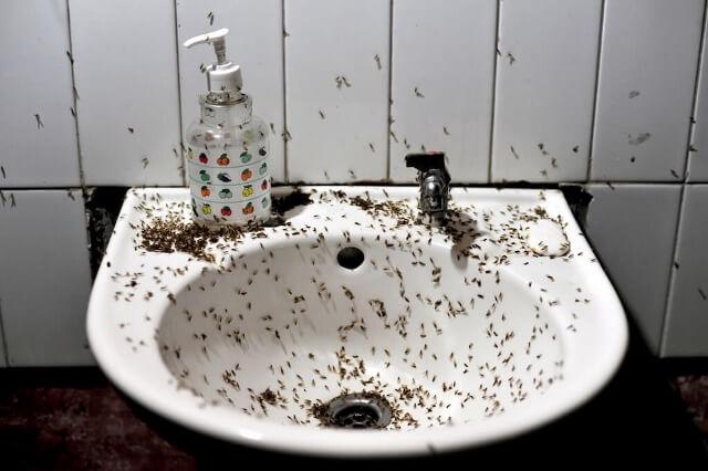 Как избавиться от мелких мошек в доме: способы войны с раздражителями