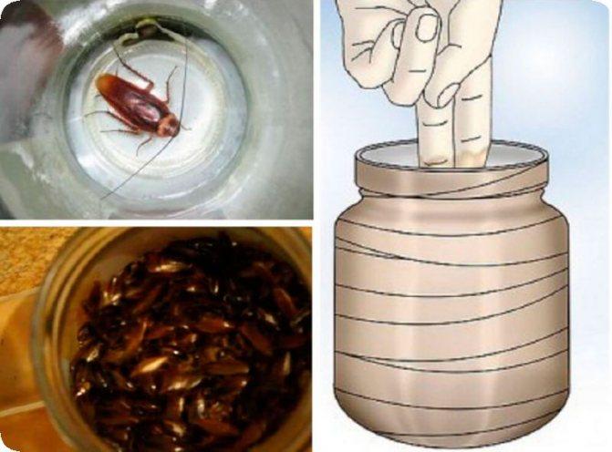 Как избавиться от тараканов дома: народные рецепты и препараты профи