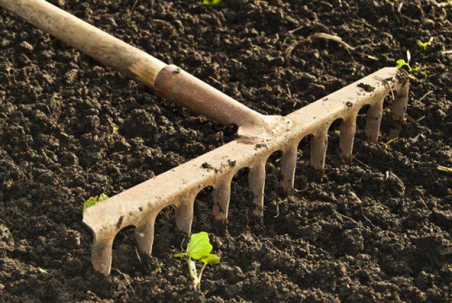 Почему зеленеет земля в теплице: поиски причин и устранение проблемы
