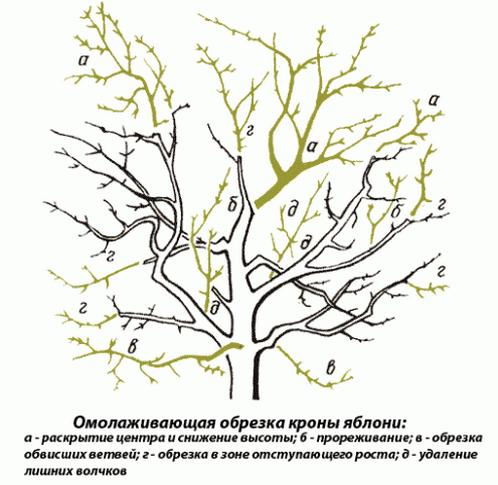 Как обрезать плодовые деревья правильно: виды процедур и их особенности