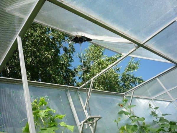 Почему желтеют листья у огурцов: причины и как с этой бедой бороться