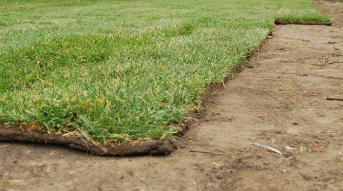 Грунт для газона: правильный выбор почвы и ее корректная подготовка