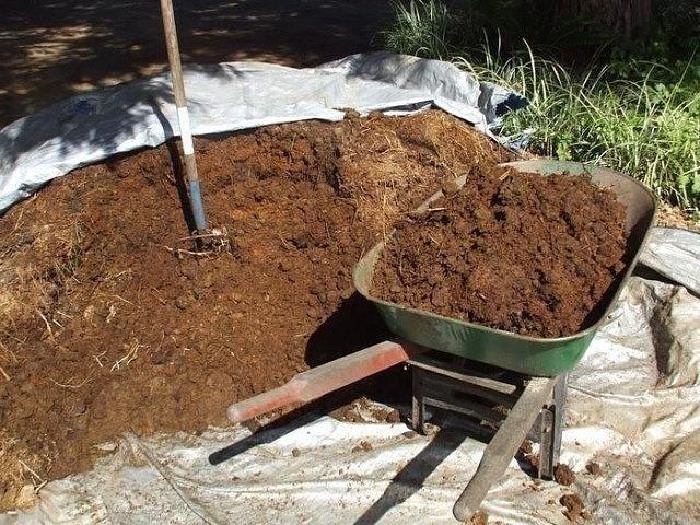 Как повысить плодородие почвы: наиболее эффективные способы «возрождения»