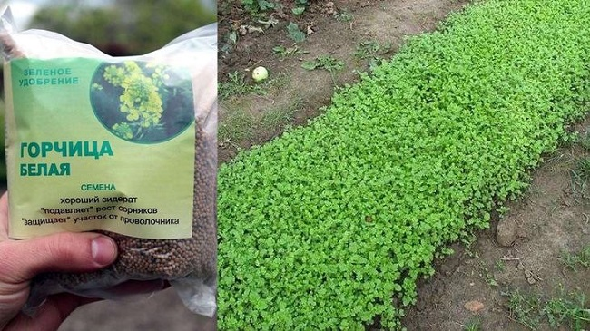 Как избавиться от сорняков: способы борьбы с упрямыми «захватчиками»