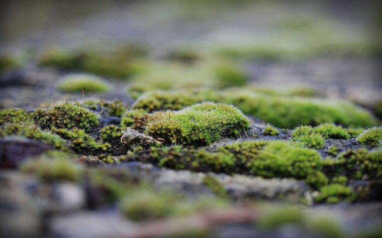 весной в теплице зеленеет земля почему