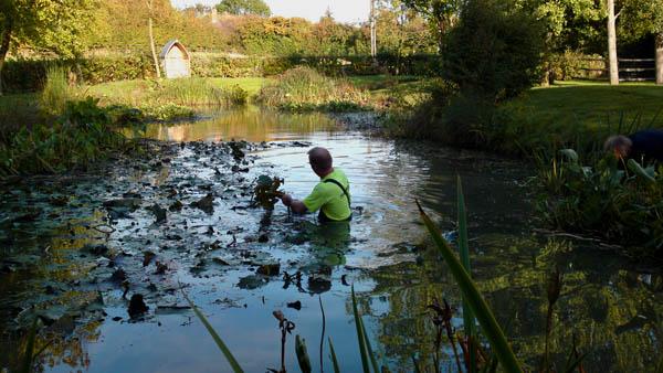 Как очистить пруд: способы избавления от ила и нежелательной растительности