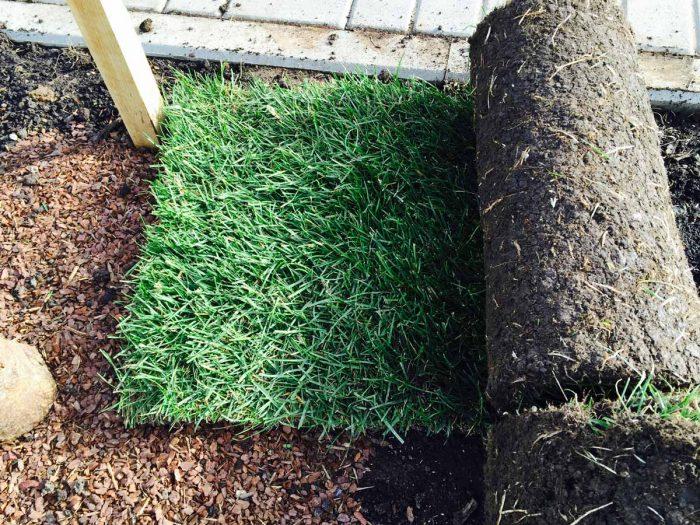 Укладка рулонного газона: технология, ее особенности и рекомендации
