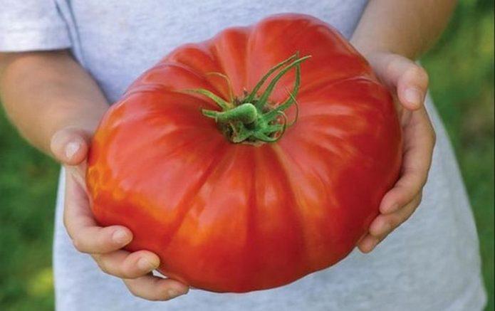 Как и чем опрыскивать томаты: правила обработки и ассортимент средств