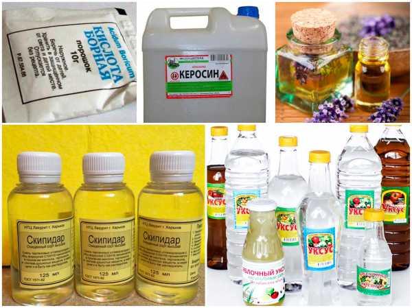 Как избавиться от клопов в доме: возможные способы и эффективные препараты
