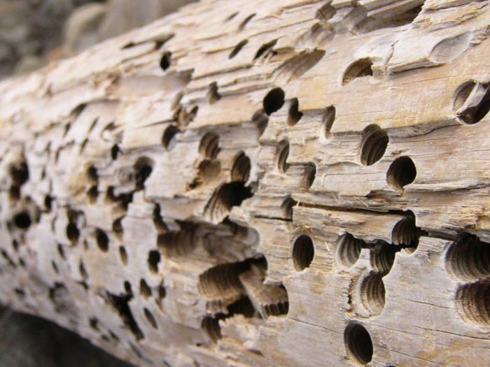 Чем обработать забор: особенности защиты дерева и потенциальные средства
