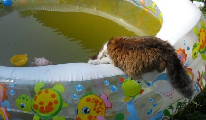 Как заклеить надувной бассейн в домашних условиях: 6 способов «лечения»